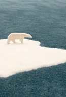 Global Warming Rug Thumbnail Image
